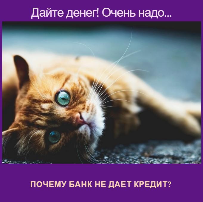 Почему банк не дает кредит?